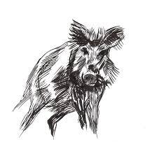 Wild Boar Bearhug Boar Pinterest Wild Boar Tattoo And