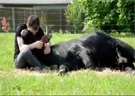 Resultado de imagem para homens e touros