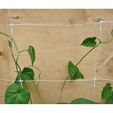 Climbing Plant Support