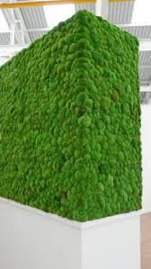 indoor live plant displays indoor live plant displays living wall green moss wall