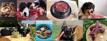 a collection of raw dog food images and dogs eating meat
