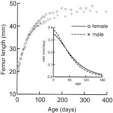 Ontogeny Of Sexual Dimorphism In Chinchilla Lanigera