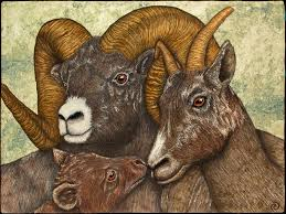 Bighorn Sheep - Rhonda Denney FRCQ | Animal Quilts | Pinterest | Sheep &  Adamdwight.com
