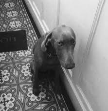 """Résultat de recherche d'images pour """"air de chien battu"""""""