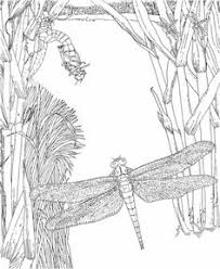 Small Picture Detailed Coloring Pages For Adults DRAGONFLY AND FAIRY COLORING