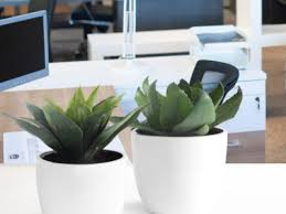Office pot plants Reception Area Montana Norwichbedbreakfastscouk Plant Couture Francisco Plant Couture