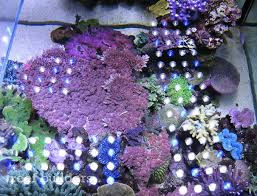 orphek nilus multicolor led light tested and reviewed over a dutch reef tank news reef builders the reef and marine aquarium blog