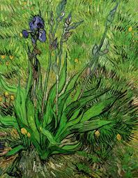1889 the iris