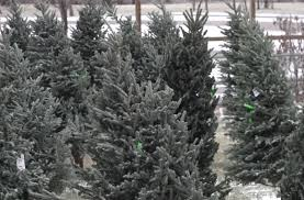 Hundreds of trees will be available, ranging in size from 4 feet to 12 feet. Visitors can expect a variety tree types, including Ponderosa Pine and Black Rapid City Club for Boys kicks off annual Christmas sale - KNBN