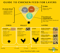 Different Types Of Chickens Chart Mash Pellets Or Crumble Feed The Result Will Surprise You