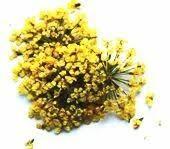 <b>Сухоцветы</b> желтые купить в Москве по доступной цене