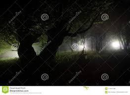 Moonlight Tree Lighting Night Fog In The Village Mysterious Moonlight Lighting Up