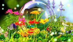 Flower Live Wallpaper Hd Nature 3d