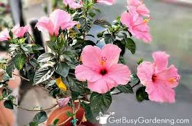 best container plants for pots outdoors