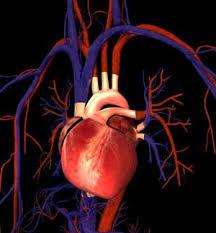 نتیجه تصویری برای قلب انسان چگونه کار می کند