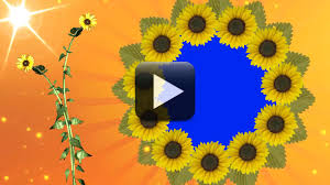 Hd Wedding Video Background Free Download All Design Creative