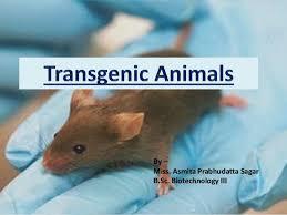 Transgenic Animals Transgenic Animals A Brief Review