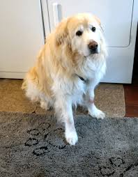 Dirty Dog Doormat Review - All Our Paws