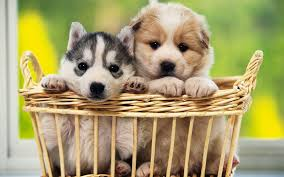cute dogs and puppies wallpaper. Brilliant And Cute Dog Puppies Wallpaper  To Dogs And N