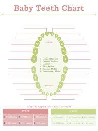 Standard Baby Teeth Chart Edit Fill Sign Online Handypdf