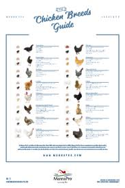 Download Our Chicken Chart