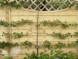 245 Best GardenEspalier Images On Pinterest  Fruit Trees Growing Cordon Fruit Trees