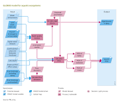Flow Chart Ecosystem Example Energy Through An Of