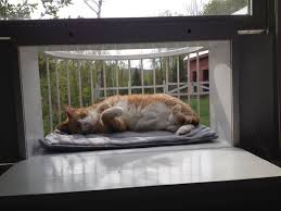 Check out photos from cat solarium owners
