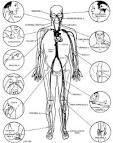 body pressure points