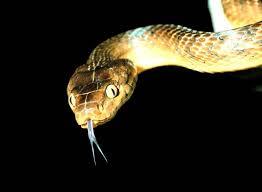 snake mouth profile. Unique Profile Inside Snake Mouth Profile G