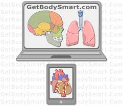 The main systems of the human body are: Getbodysmart Interactive Tutorials And Quizzes On Human Anatomy And Physiology Human Anatomy And Physiology Human Anatomy Anatomy And Physiology Textbook