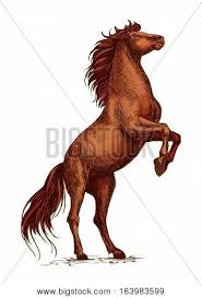 wild paint horses rearing. Modren Horses Wild Arabian Brown Horse Stallion Raging And Rearing On Rear Hoof Vector  Sketch Strong On Paint Horses Rearing W