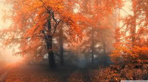 Forest wallpaper, Autumn forest, Fall ...