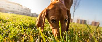 Allergies in Dogs | Pure Paws Veterinary Care of Hell's Kitchen