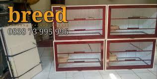 Glodok parkit glodokan kayu tempat sarang ternak breeding koloni bertelur kandang burung lovebird parkit kenari dll glprkt. Kandang Ternak Kenari Home Facebook