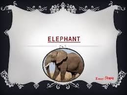 an essay on elephant for kids in english language  an essay on elephant for kids in english language
