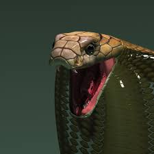 king cobra snake fangs. Exellent Fangs King Cobra Snake Fangs  Photo2 To Cobra Snake Fangs Animalia Life