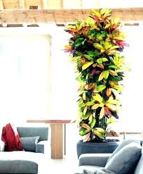 indoor plant ideas nz large low light plants tall house small best