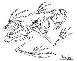 8d54f55be1e1b12d7f0366b5f0dcc9ed biology frogs 66 b�sta bilderna om animal dissection p� pinterest on crayfish dissection worksheet