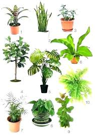 types of house plants types of bamboo house plants type plant haiku nursery grown diffe indoors