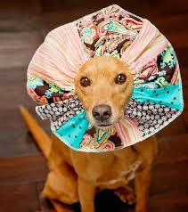 creative pet cones elizabethan collars 18 605