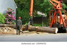 Tree Service High Res Stock Images | Shutterstock