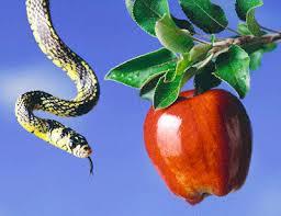 Image result for apple in the garden of eden