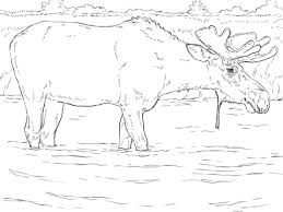 Small Picture Moose Bull coloring page Free Printable Coloring Pages