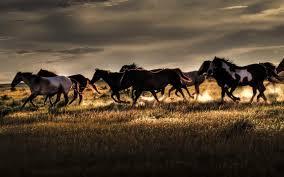 wild horses mustang wallpaper. Wild Horses Mustang Wallpaper Throughout