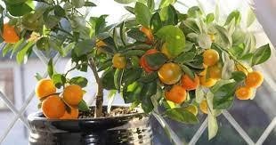 A Mini Guide For Plantation Of Common Fruits Plants With