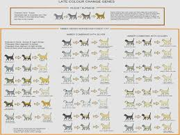 Kitten Color Chart The Miracle Of Bengal Kitten Eye Color