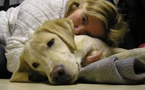 8 early warning signs of canine cancer that dog owners can t ignore the dog people by rover