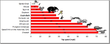 Animal Speed Chart How Fast Is Usain Bolt