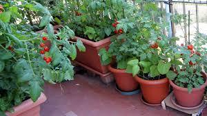 home vegetable garden market